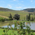 Link toSouth Africa's wine country: Constantia, Stellenbosch and Franschhoek