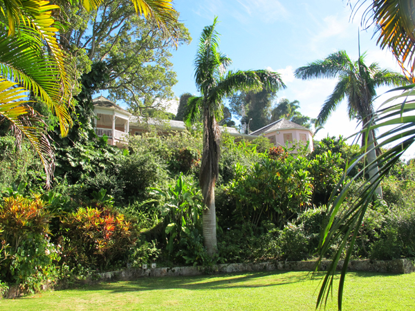 Craighton Estate, Blue mountain, Jamaica