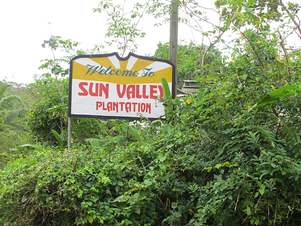 Sun Valley fruit and spice plantation, Jamaica
