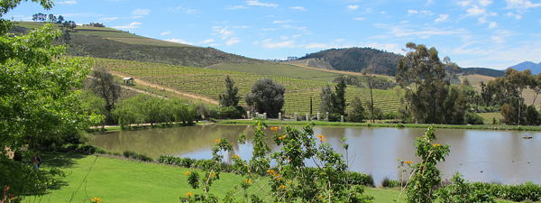 south africa wine © Will Travel for Food