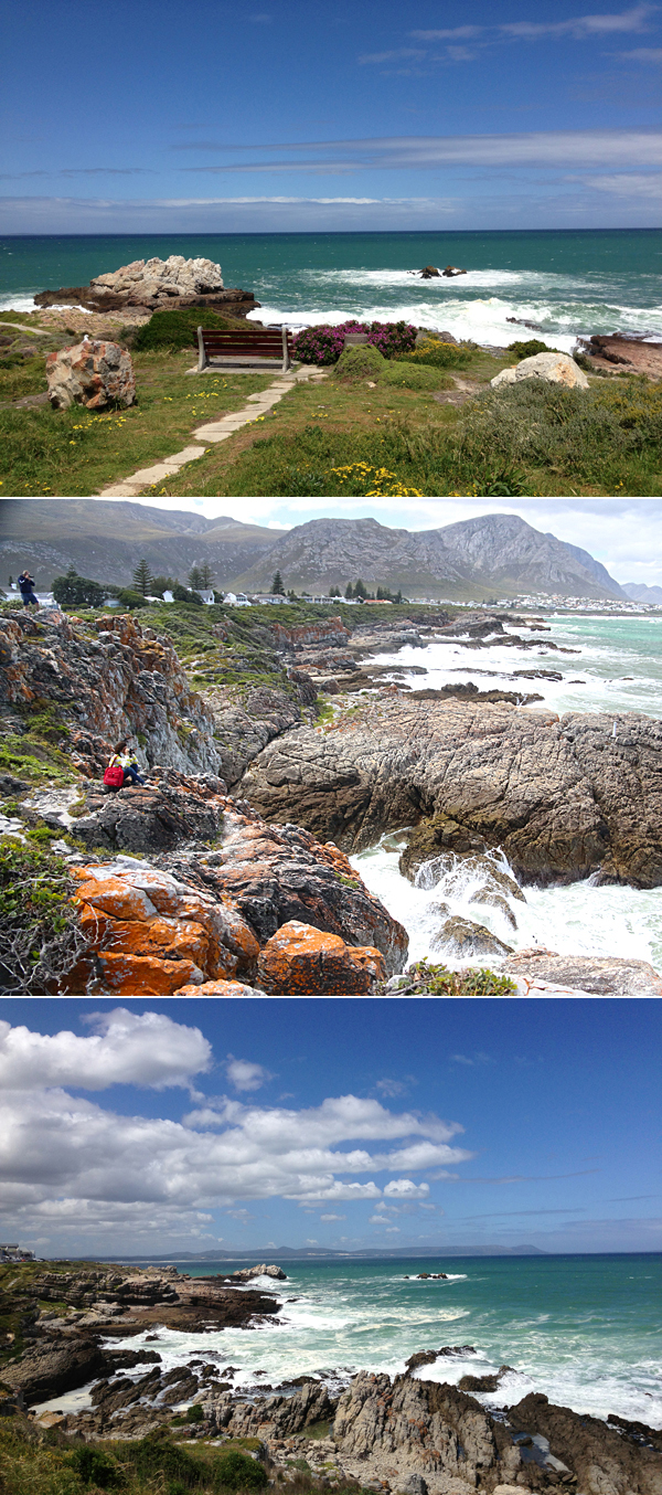 whale watching hermanus south africa © Will Travel for Food