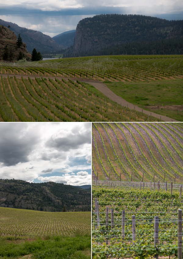 blue mountain winery okanagan valley british columbia © Will Travel for Food