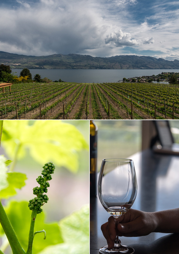 okanagan valley wineries © Will Travel for Food