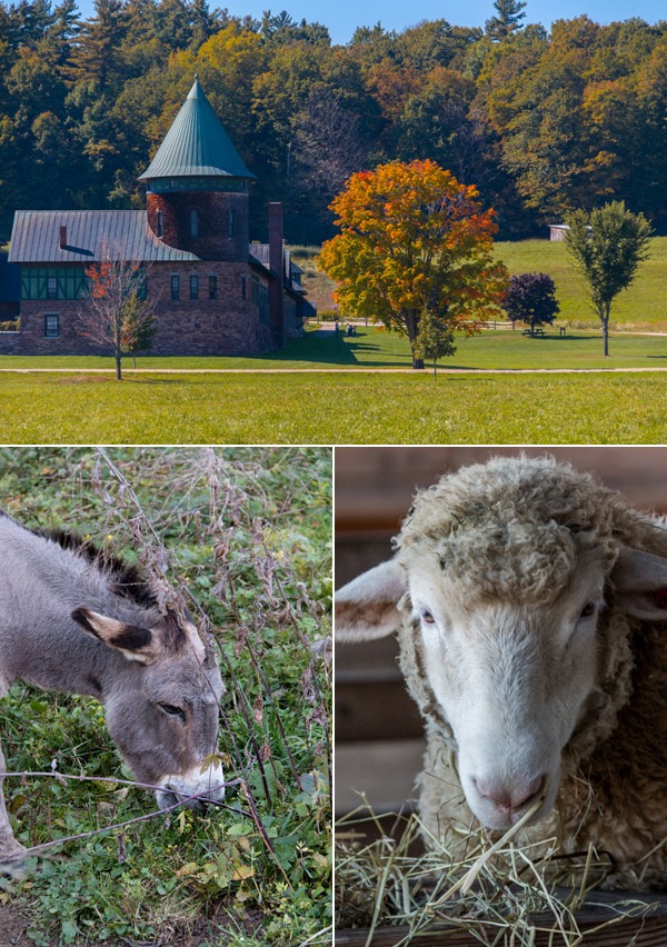 shelburne farms what to do vermont © Will Travel for Food
