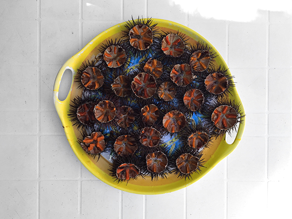 best sea urchin porto badisco puglia © Will Travel for Food