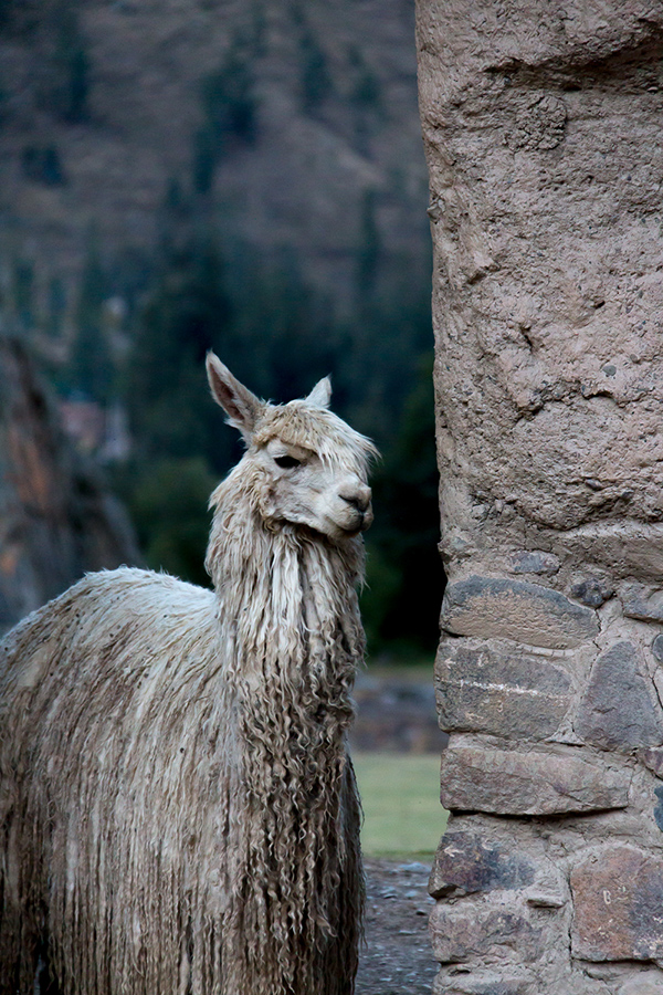 peru what to know before you go © Will Travel for Food