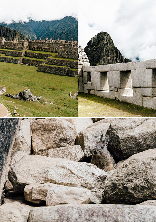 machu picchu chinchilla © Will Travel for Food