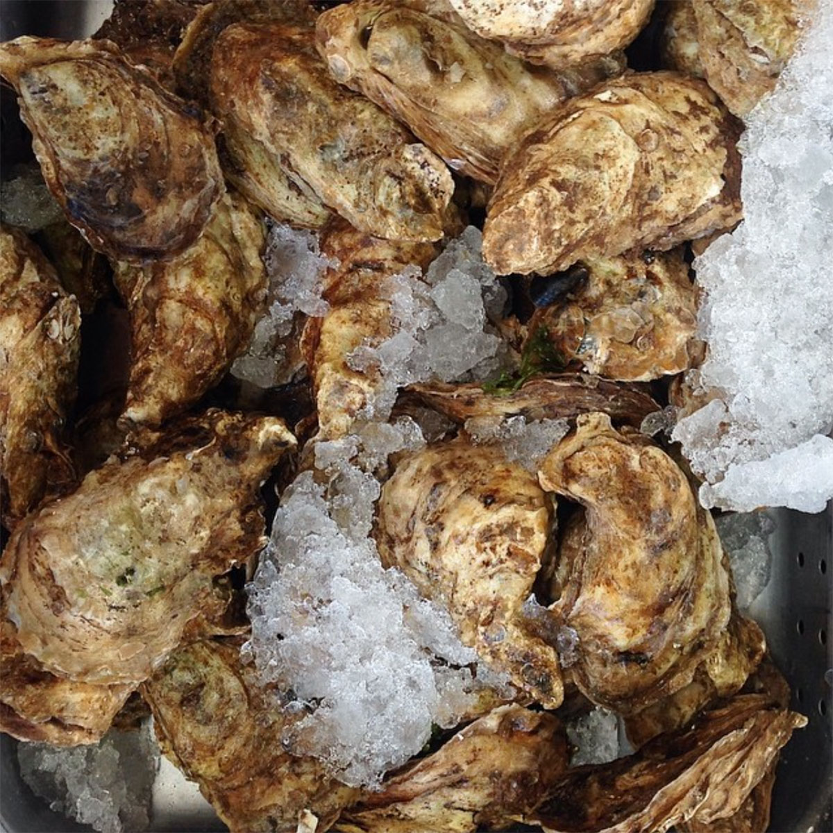 jean-talon-market-best-oysters © Will Travel for Food
