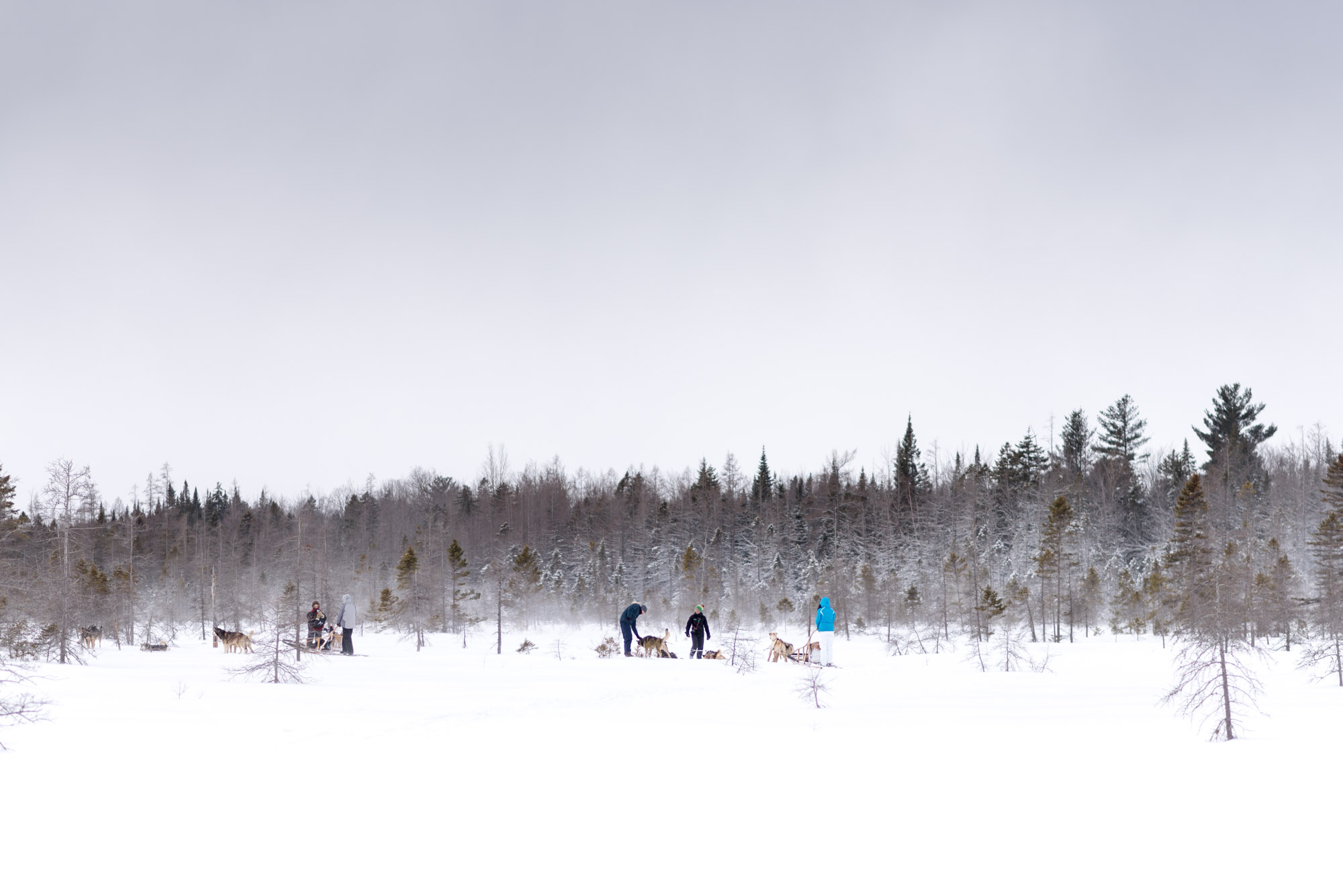 willtravelforfood-quebec-dog-sledding Photo © Jeff Frenette Photography