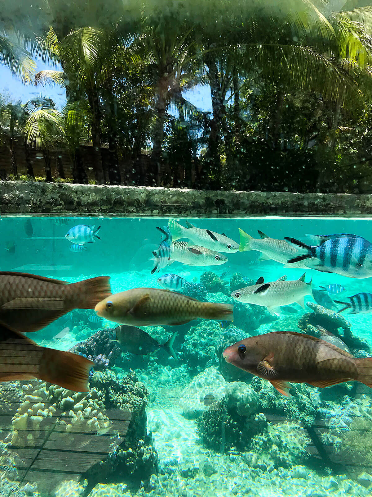 french-polynesia-snorkeling © Will Travel for Food