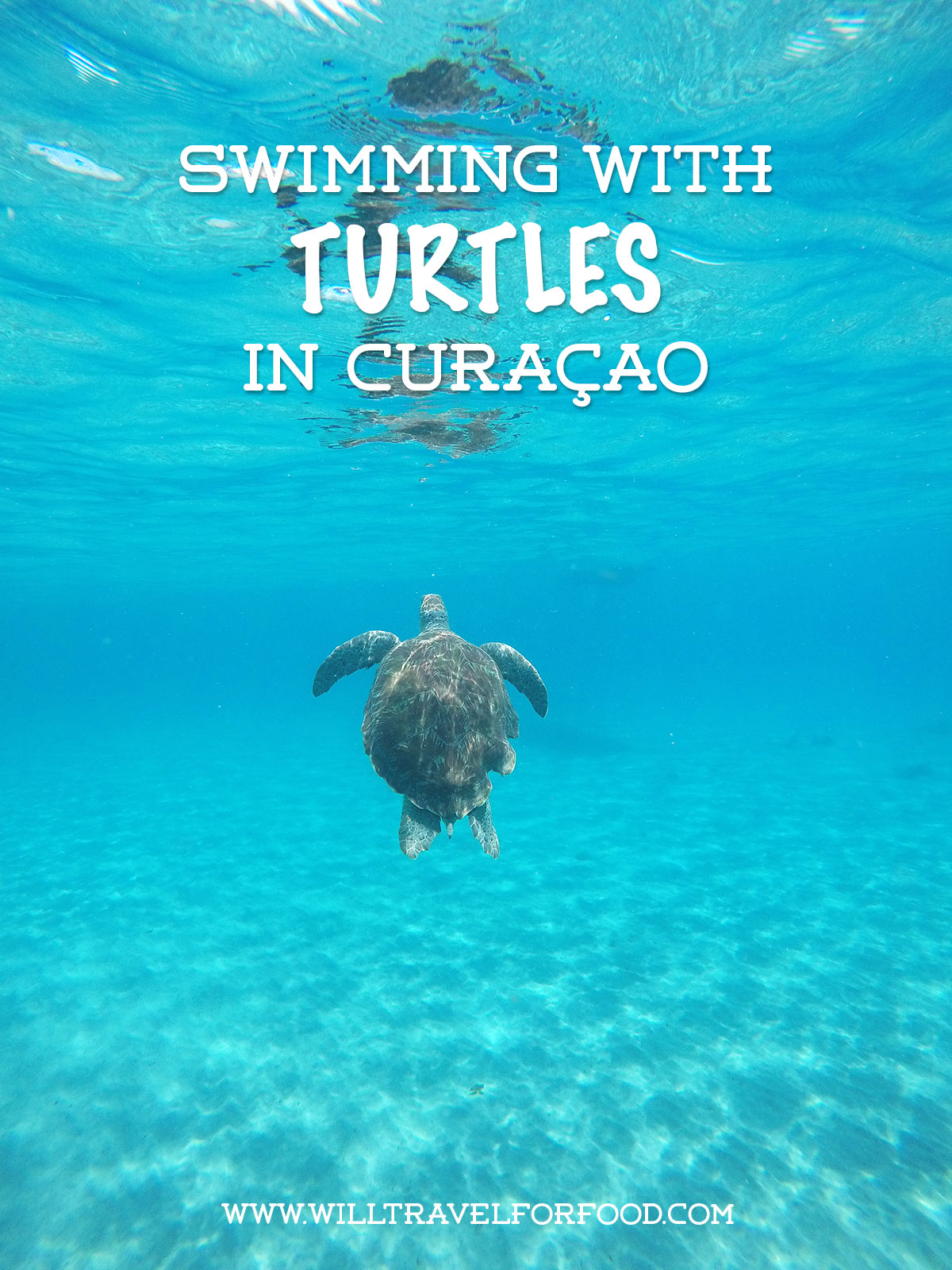 swimming-with-turtles-curacao © Will Travel for Food