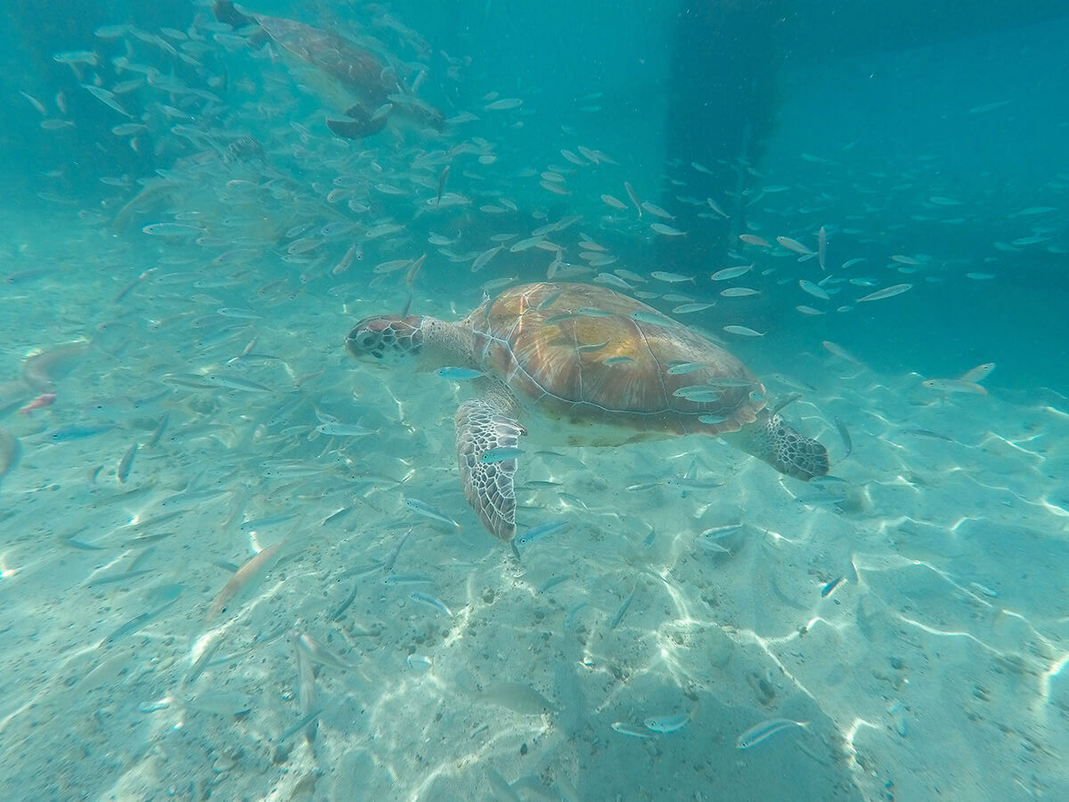 snorkelling-curacao ©Will Travel for Food